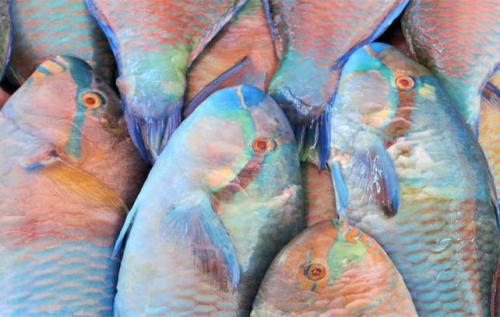 Exzotikus halak