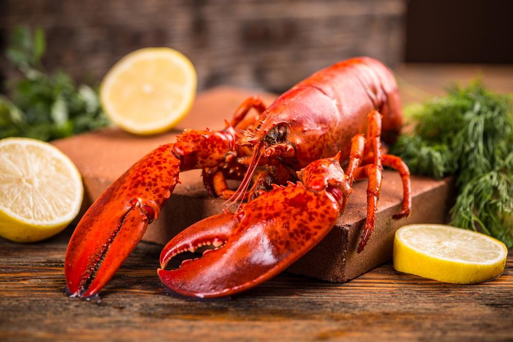 Miért lesz rákvörös a homár?