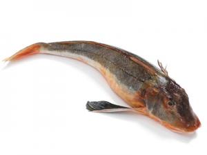 Morgóhal