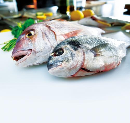 Tengeri melegvízi halak