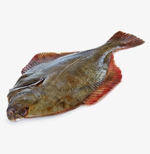 Közönséges nyelvhal