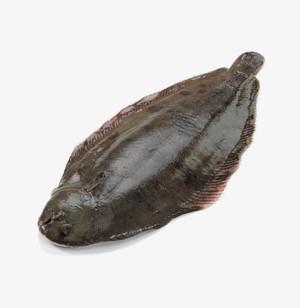 Doveri nyelvhal